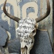 Yak skull in Tibet — Stock Photo