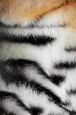 Fur of a tiger — Stock Photo