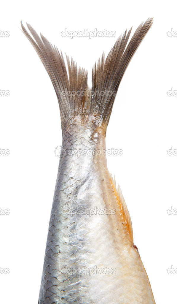 Tail fish herring isolated on white background  Stock Photo #5314199