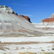 Stock Photo: Petrified Forest 2