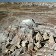 Stock Photo: Petrified Forest 5