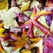 Dry leaf fall — Stock Photo