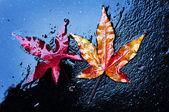 Dry leaf fall — Stock Photo
