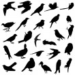 Birds silhouettes - Stock Photo