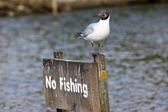 No fishing — Stock Photo