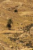 Desierto 2 — Foto de Stock