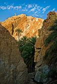 Oasis in Tunisia — Stock Photo