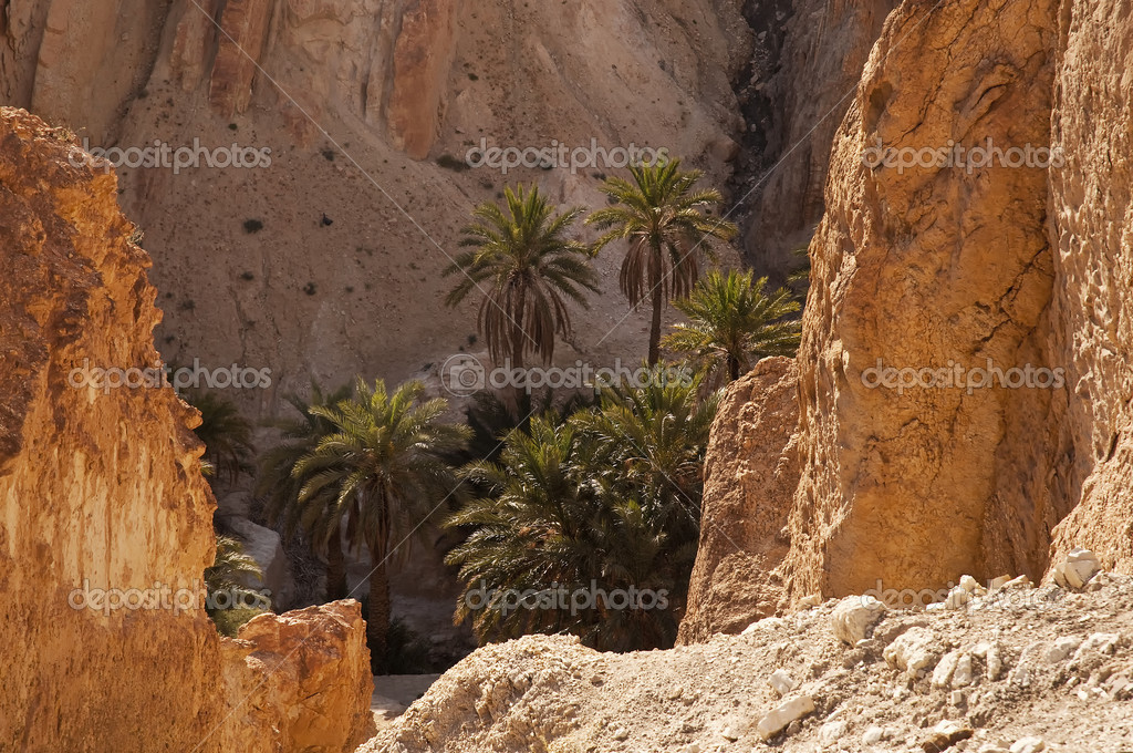Mountain oasis in southern Tunisia, Africa — Stock Photo #4561719