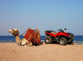 Camel and quad — Stock Photo
