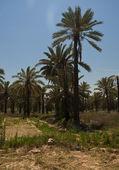 Desert oasis — Stock Photo