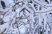 Winter details 3 — Stock Photo