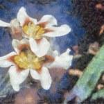 White Iris — Stock Photo #4516514