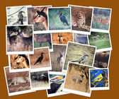 South African Wild Life Collage — Stock Photo