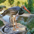 Stork on Stump — Stock Photo