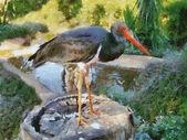 Stork on Stump — Stock Photo