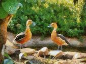 Patos silbones fluvous — Foto de Stock