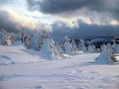 Tormenta de nieve — Foto de Stock