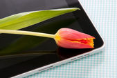 Tablet touch with tulip — Stock Photo
