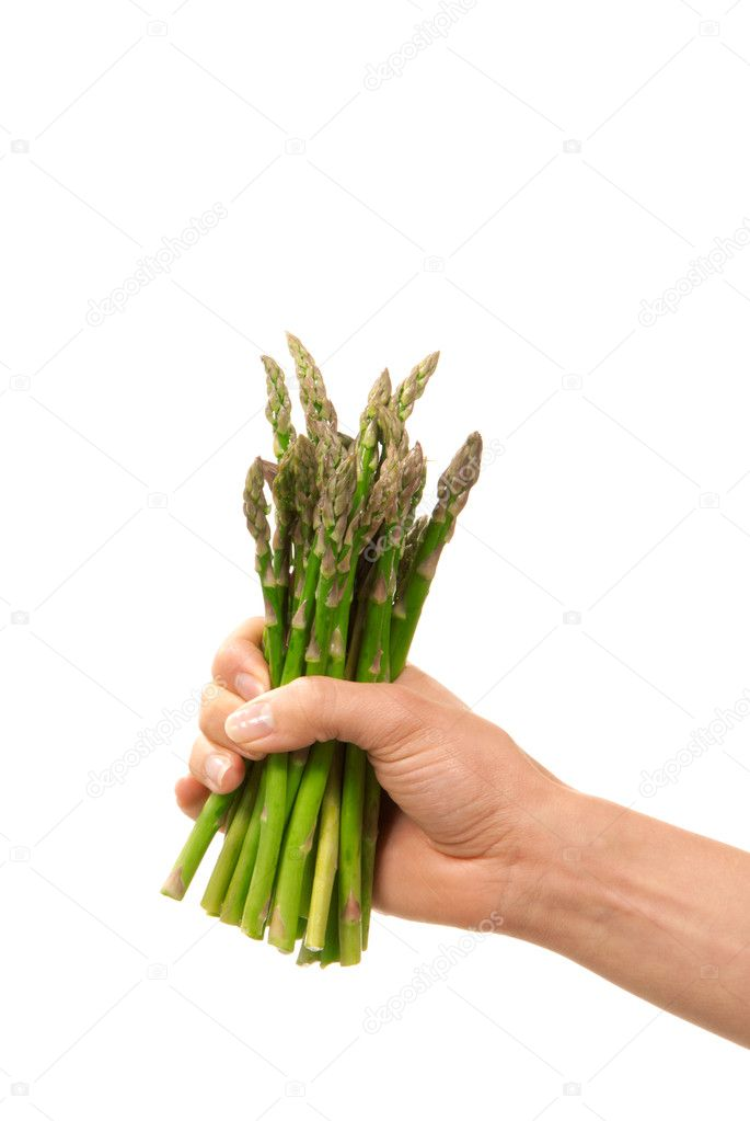 Bunch of fresh green asparagus in hand healthy organic vegetarian eating isolated on a white background  Stock Photo #5280384