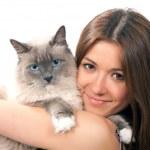 mulher segura seu gato ragdoll lindo com olho azul — Foto Stock