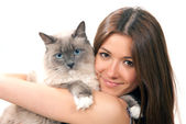 Woman hold her lovely Ragdoll cat with blue eye — Stock Photo