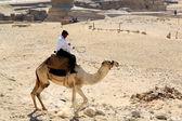 Egyptian policeman on a camel — Stock Photo