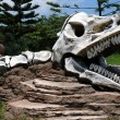 Breadboard model of a skull of a dinosaur in park - Stock Photo