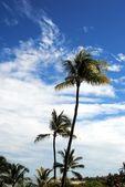 Palmiye ağacı semavi bir manzara karşı. — Stok fotoğraf