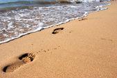 Traces sur le sable côtier — Photo