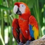 Постер, плакат: The big parrots