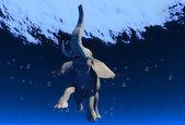 Elephant. — Stock Photo