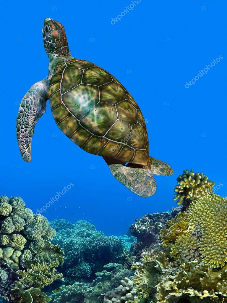 Underwater Picture of the Turtle, Red sea — Stock Photo #5279736