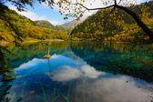 Forest and lake landscape of China jiuzhaigou — Stock Photo