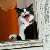 Amazing funny cat — Stock Photo