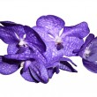 Orchideen_Gruppe1 - Orchidaceae — Stock Photo