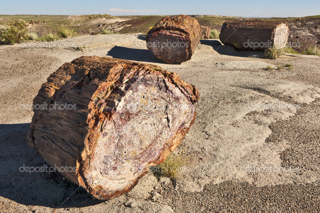 Pieces of crystalized wood in Arizona's Petrified Forest. — Stock Photo #4561418