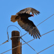 Electric Vulture — Stock Photo #4654167