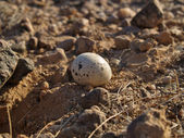 Egg on the rocks — Stock Photo