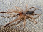 太陽のクモ — ストック写真