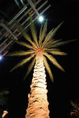 Illuminated Palm Tree — Stock Photo