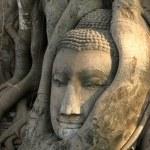 Ancient Thai Buddha Head — Stock Photo