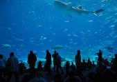 Georgia Aquarium Food Court — Stock Photo