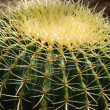 Stock Photo: Cactus close-up