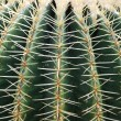 Cactus close-up — Stock Photo