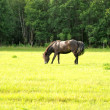 Horse in pasture - Stock Photo