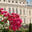 Beautiful roses and Baroque - Rococo style palace in background - Stock Photo