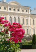 美丽的玫瑰和巴罗克-洛可可风格在背景中的宫殿 — 图库照片