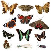 Schmetterlinge, isoliert auf weiss — Stockfoto