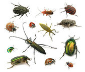 Beetles isolated on white — Stock Photo