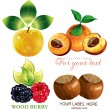 Royalty-Free Stock Vector Image: Vector set fruits and berries